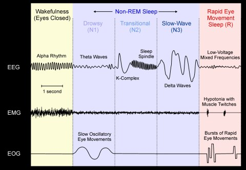 sleep stages color