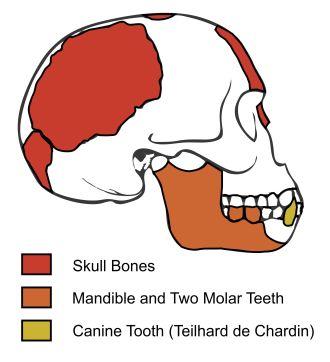 piltdown skull