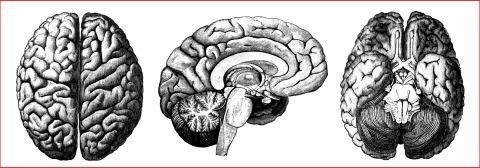 Human Brain Header