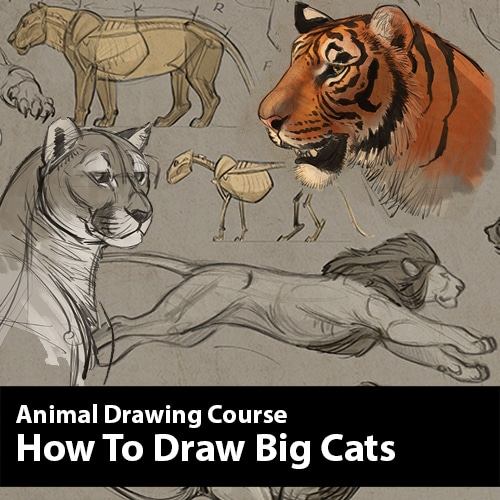 How to Draw Big Cats Animal Drawing Course