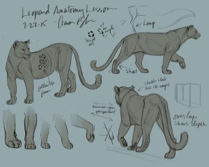 How to Draw Animals Big Cats