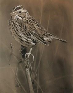 Savannah Sparrow Animal Art Gallery