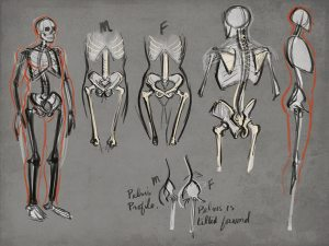 Figure Drawing Skeleton
