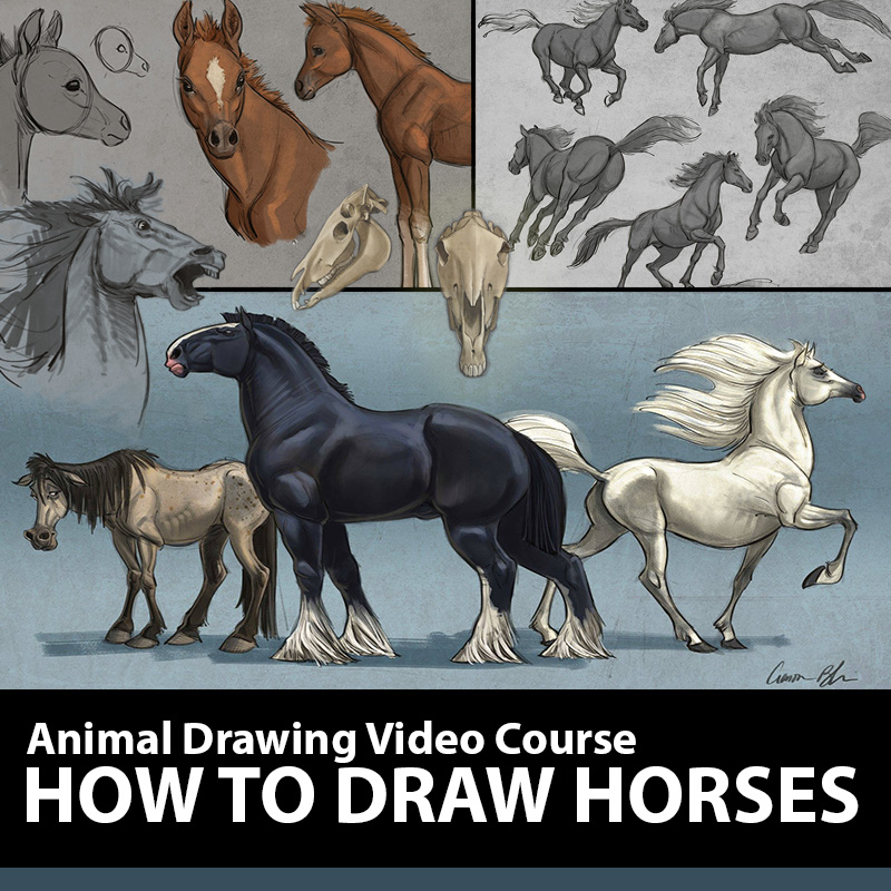 How To Draw Horses Course The Art Of Aaron Blaise