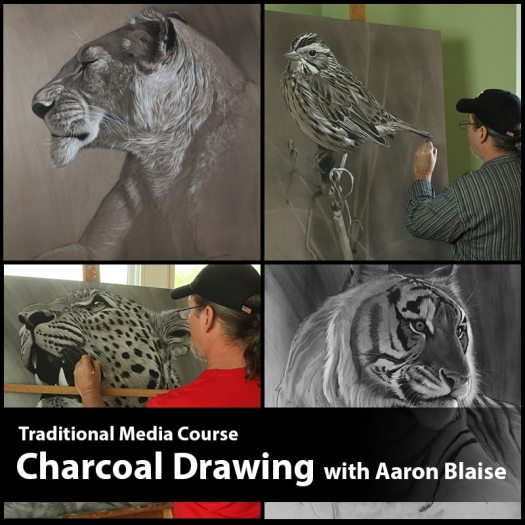 Charcoal Drawing Lessons