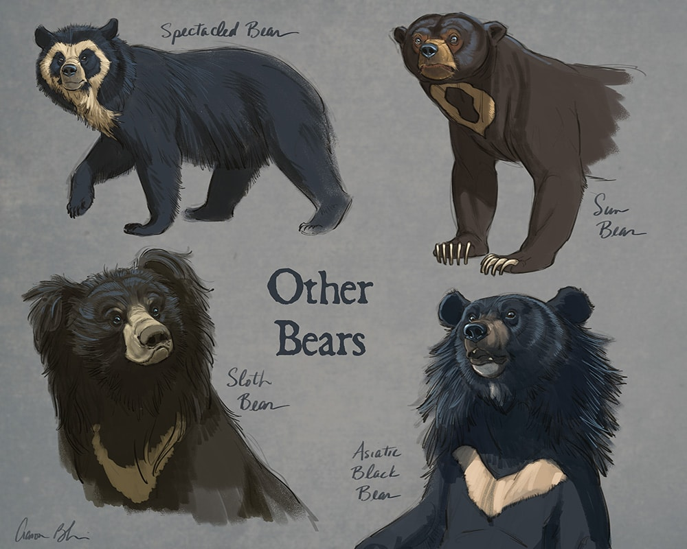 How To Draw Bears Tutorial And Video Lessons With Aaron Blaise