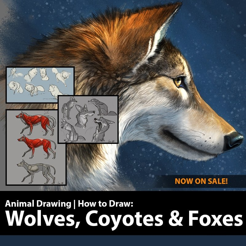 How To Draw Wolves Coyotes And Foxes On Sale