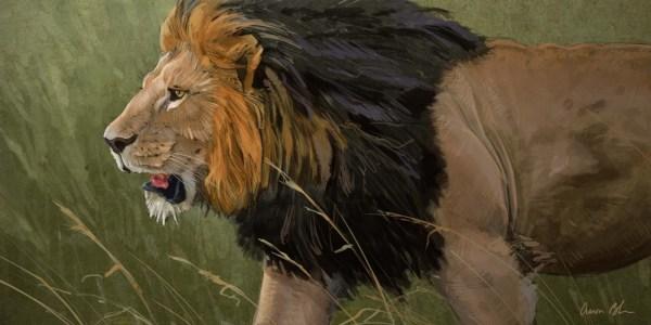 Couple Of Lion Paintings. - Art Aaron Blaise