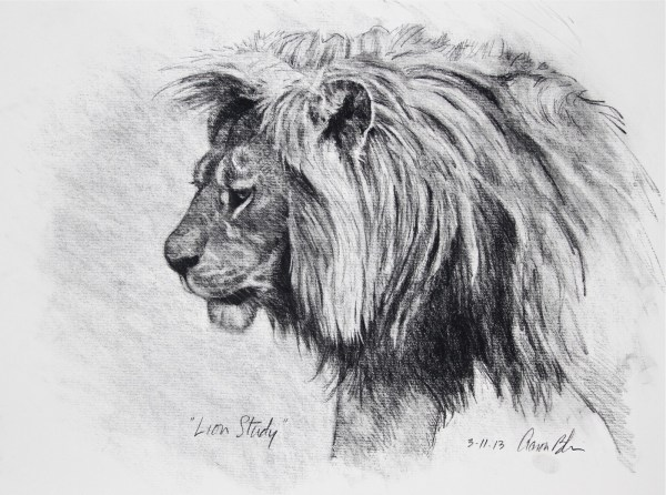 """Lion Study 18""""x24"""" Charcoal Paper. Drawing And"""