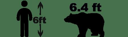 black bear size comparison Asiatic Black Bear facts