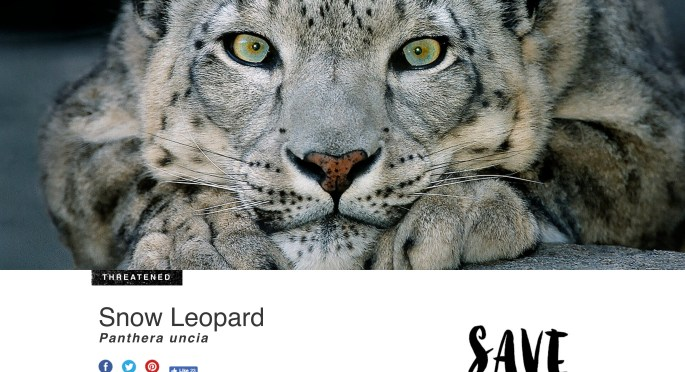 Snow Leopard Conservation website