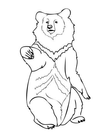 Asiatic bear coloring page