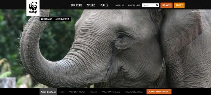 WWF asian elephant website screenshot