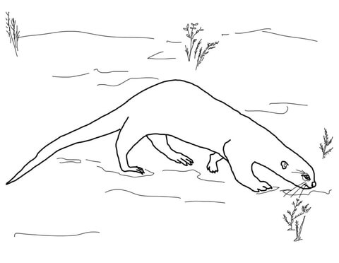Giant otter coloring page
