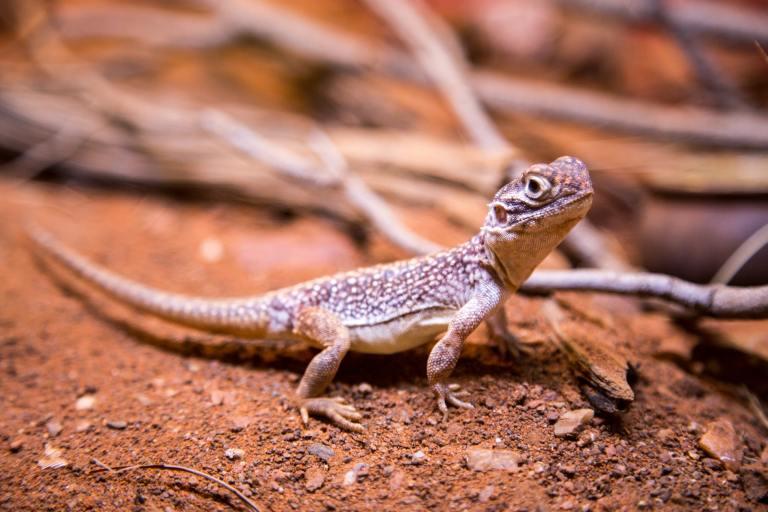 Reptile Rockery Creature Hero Project