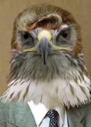 What if Bob Hawke was a hawk?