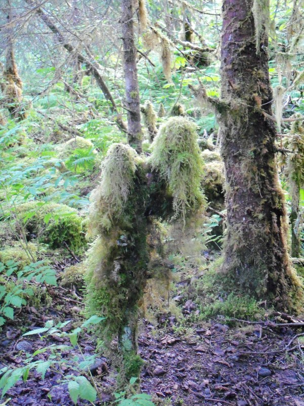 Creatures Of Nature Art Mossy