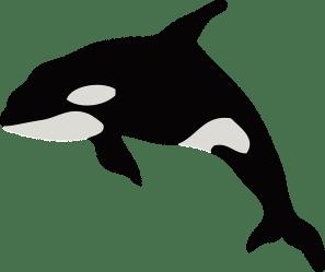 Killer whale clipart Free download transparent PNG Creazilla