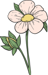 Strawberry flower clipart Free download transparent PNG Creazilla