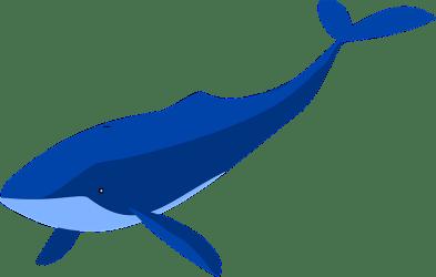Blue Whale clipart Free download transparent PNG Creazilla