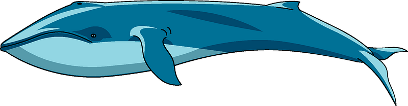 Whale clipart Free download transparent PNG Creazilla