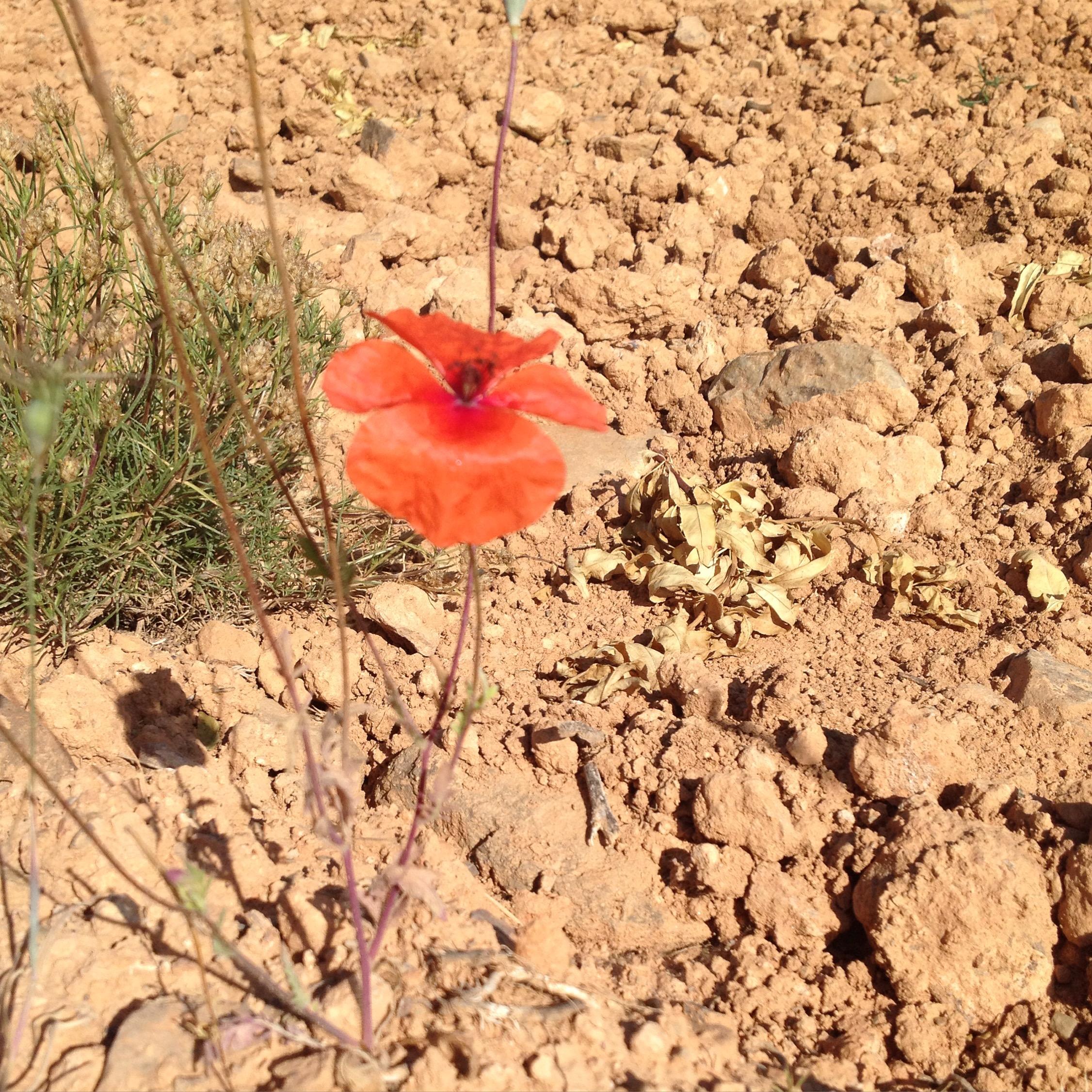 FLOR que nace de tierra seca. Superación
