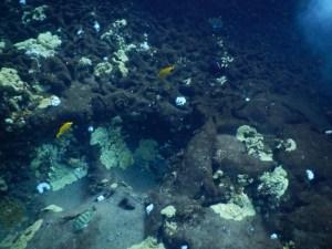 molokini snorkeling corals