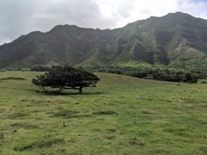Kualoa Ranch Horseback Riding Review
