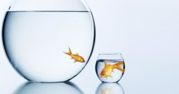 Small Banks Fare Better