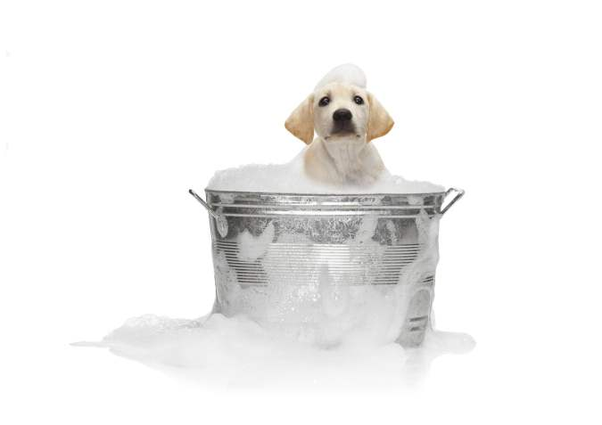 Puppy Taking a Bath in Metal Pail