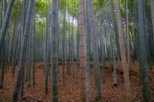 The Arashiayama bamboo forest, one of the most unusual places on earth.