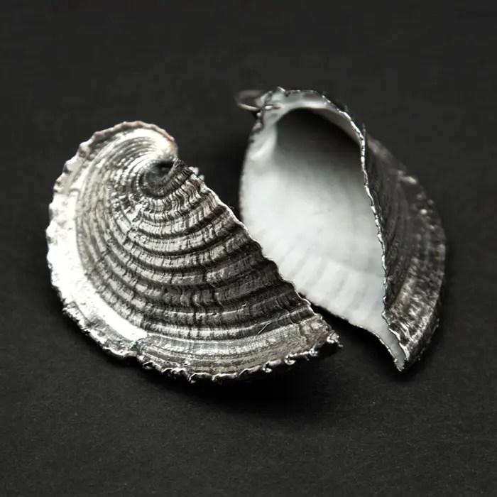 Silvered Heart Cockle