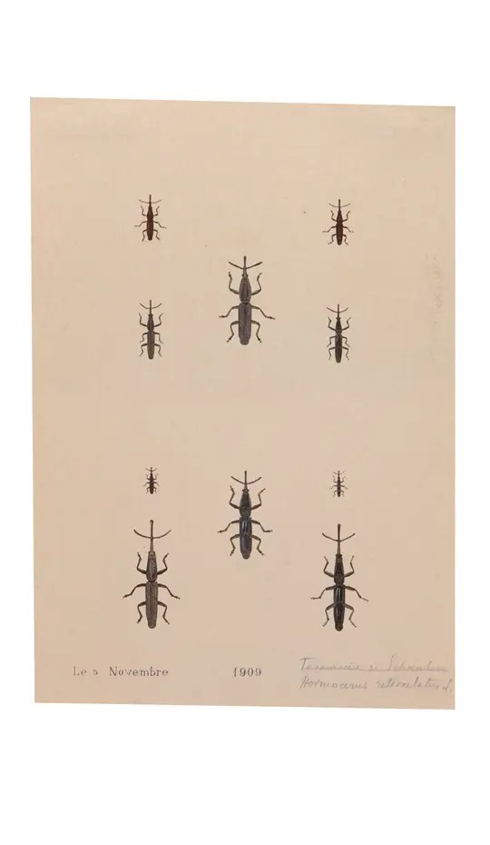Ten Small Painted African Weevil Bugs. Two groupings of five, one above the other. On creamy, antiqued paper.