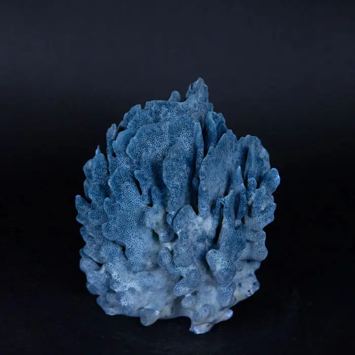 small-blue-coral