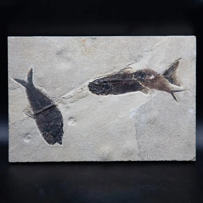 fish-fossils-three-fish
