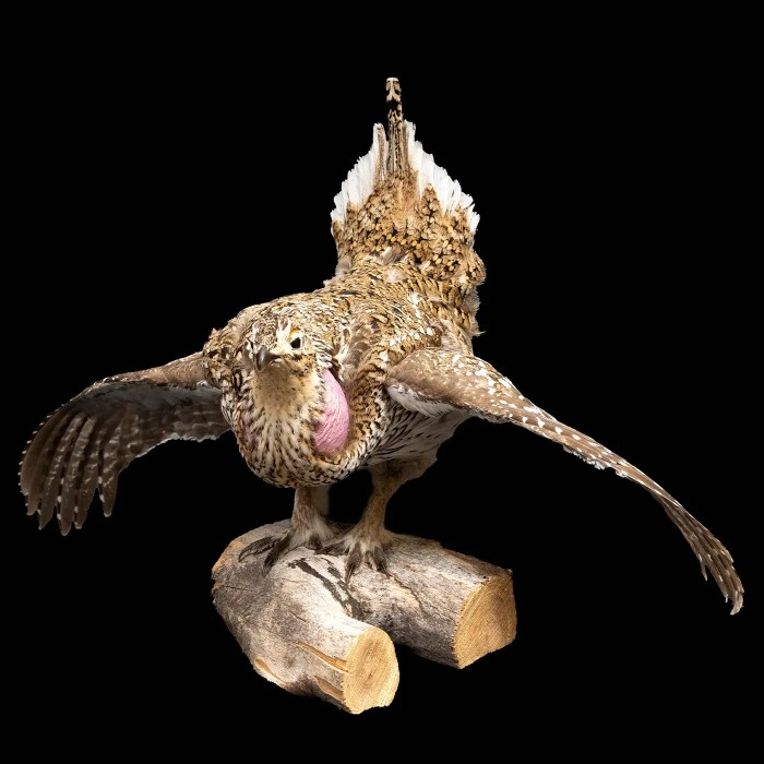Taxidermy Grouse on Wood Mount