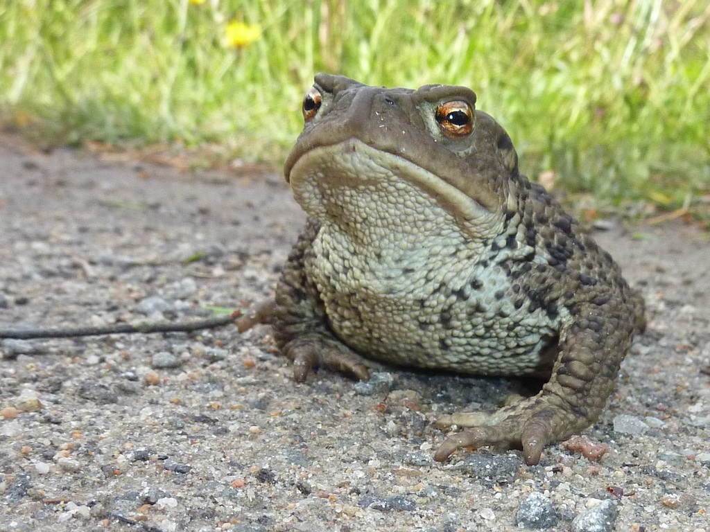 Telling Toads