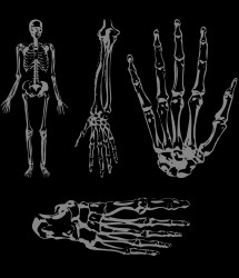 skeleton parts background body halloween clipart grey creative commons cliparts