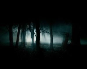 Bosque de nuebla