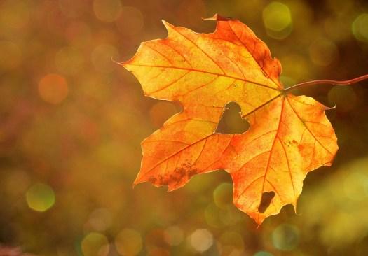 coeur dans une feuille d'automne