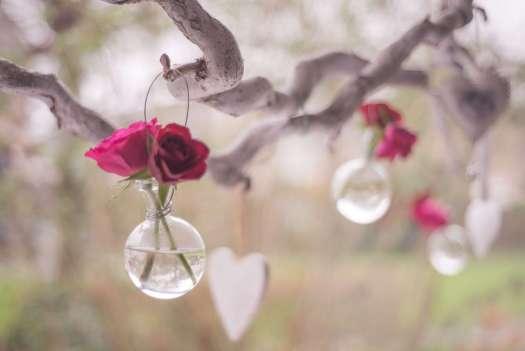 rose dans une bulle accrochée à une branche : image de pause