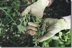Des mains gantées présentent des végétaux.