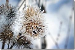 7 gestes pour préparer son jardin à l'hiver