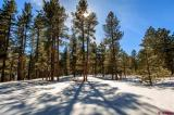67-Red-Bluff-Road-Drive, Vallecito Lake/Bayfield, CO