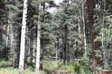 TBD-Grizzly-Lane, Durango, CO