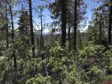 186-Pine-Ridge-Drive, Bayfield, CO