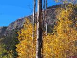 TBD-N-Hwy-550-Highway, Durango, CO