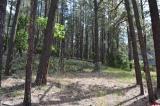 213-Spruce-Way, Bayfield, CO