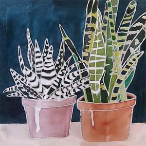 Two pots of succulents