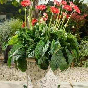 Green Frog Plant Pot Feet – Set of 3